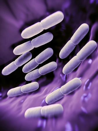 bacterias: Bacterias Lactobacillus bulgaricus. Ellos son en forma de barra, las bacterias gram-positivas. Crecen en medio ácido y producen ácido láctico a partir de la fermentación de hidratos de carbono. El ácido láctico producido por la fermentación de la leche es responsable de la preservación y fl Foto de archivo