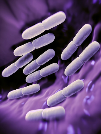 bulgaricus: Lactobacillus bulgaricus bacteria. They are rod-shaped, gram-positive bacteria. They grow in acid media & produce lactic acid from the fermentation of carbohydrates. Lactic acid produced by the fermentation of milk is responsible for the preservation & fl