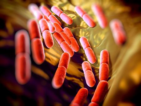 biologia: Bacterias Lactobacillus bulgaricus. Ellos son en forma de barra, las bacterias gram-positivas. Crecen en medio �cido y producen �cido l�ctico a partir de la fermentaci�n de hidratos de carbono. El �cido l�ctico producido por la fermentaci�n de la leche es responsable de la preservaci�n y fl Foto de archivo