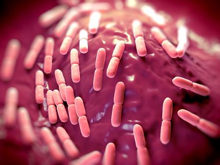 Bacterias Lactobacillus bulgaricus. Ellos son en forma de barra, las bacterias gram-positivas. Crecen en medio ácido y producen ácido láctico a partir de la fermentación de hidratos de carbono. El ácido láctico producido por la fermentación de la leche es responsable de la preservación y fl Foto de archivo