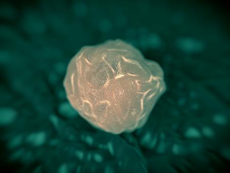La moelle osseuse, les cellules souches de cellules souches de moelle osseuse humaine. Ces cellules sont appelées cellules souches pluripotentes, car ils constituent les précurseurs de tous les types de cellules sanguines. Pendant le développement de globules la cellule souche multipotente développe par un processus de savoir Banque d'images - 41096842