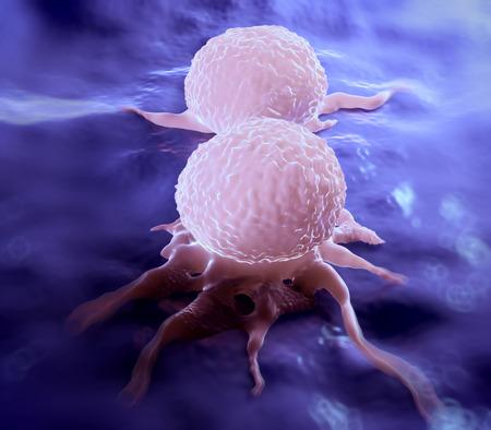 Het verdelen van borstkanker cel, toont zijn oneffen oppervlak en cytoplasmische projecties. Het is in de telofase fase van de celdeling (mitose). In deze laatste fase van de mitose, hebben de chromosomen al gedupliceerd en aan elke dochter cel.