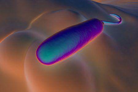 colera: Estas bacterias en forma de bastón Gram-negativas tienen un solo flagellum.They polar son la causa del cólera, una infección del intestino delgado que se transmite a los humanos a través de alimentos o agua contaminados