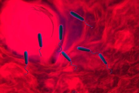 chol�ra: These Gram-negative rod-shaped bacteria have a single polar flagellum.They are the cause of cholera, an infection of the small intestine that is transmitted to humans via contaminated food or water