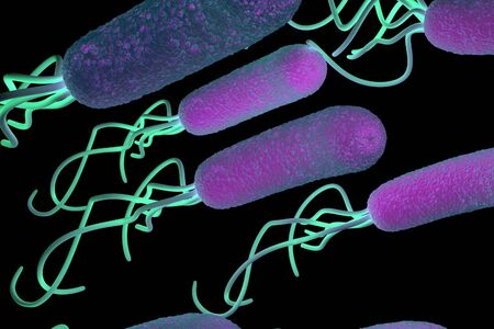 magnified image: Helicobacter pylori bacterium Stock Photo