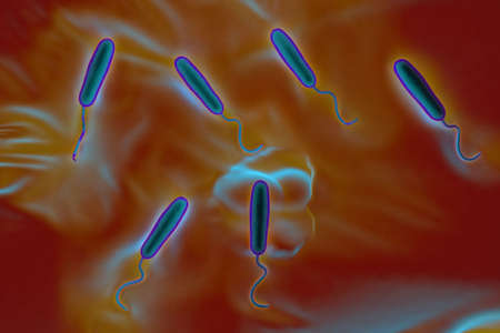 transmitted: These Gram-negative rod-shaped bacteria have a single polar flagellum.They are the cause of cholera, an infection of the small intestine that is transmitted to humans via contaminated food or water
