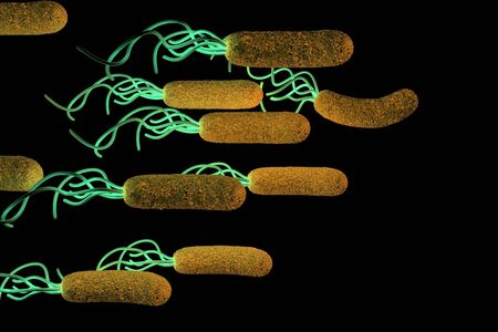 magnified image: Helicobacter pylori bacterium Stock Photo