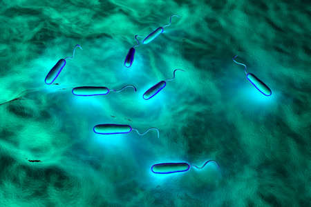cholera: These Gram-negative rod-shaped bacteria have a single polar flagellum.They are the cause of cholera, an infection of the small intestine that is transmitted to humans via contaminated food or water