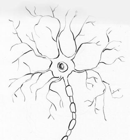neurone: multipolar neuron