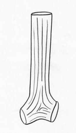 dessin au trait: Trach�ales anneaux cartilagineux d�crivent dessin dans backgound blanc