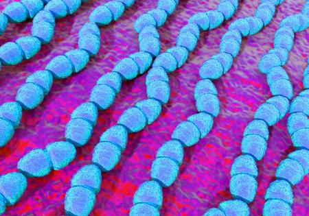Enterococcus faecalis bacteriën bekend als Streptococcus faecalis. Deze bacteriën zijn rond of ovaalvormig kokken, hier te zien kenmerkend vormkettingen cellen Stockfoto