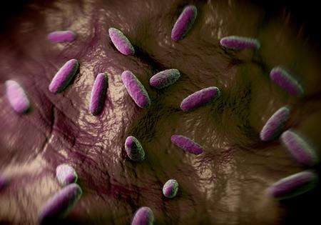 bacterias: la bacteria Salmonella typhimurium, un flagelado, bacilo Gram-negativo. S. typhimurium es una causa importante de intoxicación alimentaria (salmonelosis) en los seres humanos. La bacteria Salmonella son transmitidas en los alimentos
