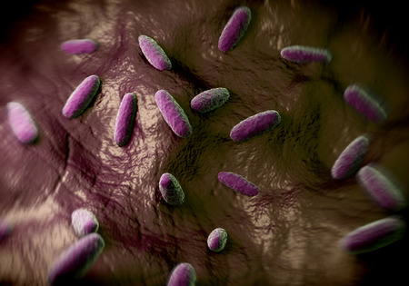 food poisoning: the bacterium Salmonella typhimurium, a flagellate, Gram-negative bacillus. S. typhimurium is a major cause of food poisoning (salmonellosis) in humans. Salmonella bacteria are transmitted in food