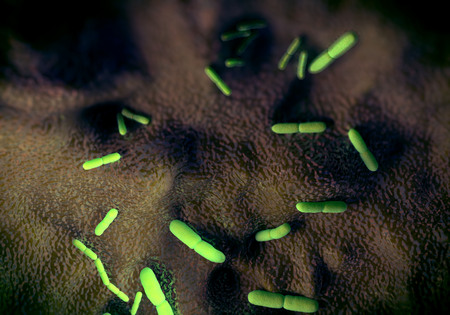 infectious disease: Yersinia pestis bacteria, artwork