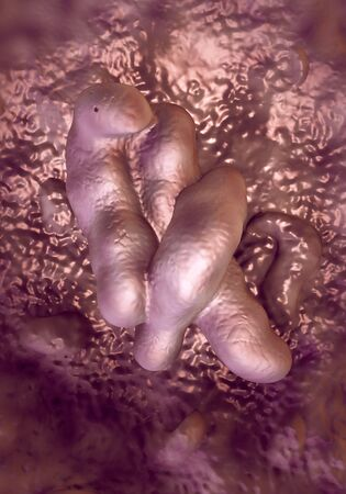 diarrhoea: Campylobacter jejuni bacteria Stock Photo