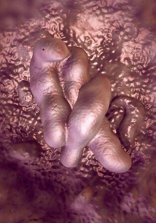 diarrhoea: Campylobacter jejuni bacteria Stock Photo