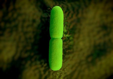 plague: Yersinia pestis bacteria, artwork