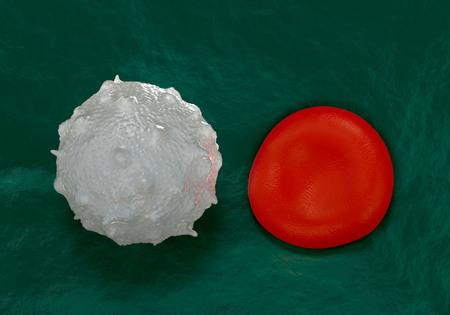 white blood cells: gl�bulos rojos, plaquetas activadas y c�lulas blancas de la sangre fotos microsc�picas