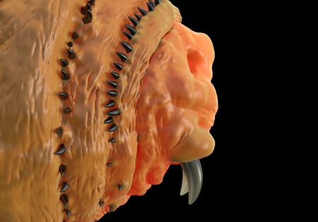 entomological: Botfly ,Bot fly larva or Gasterophilus parasitic fly larva