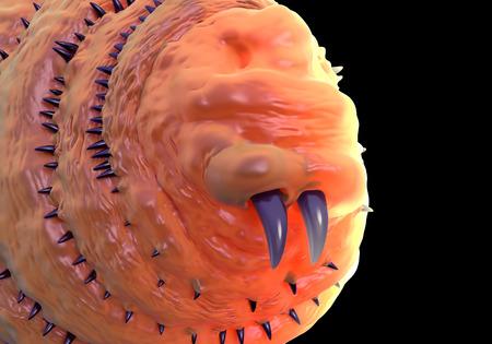 parasitic: Botfly ,Bot fly larva or Gasterophilus parasitic fly larva