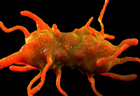 amoeba: Amoeba proteus protozoan. This is a freshwater single-celled organism that feeds on bacteria and smaller protozoa. Stock Photo
