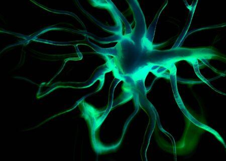 neurona: células de la neurona o nerviosos que forman parte del sistema nervioso