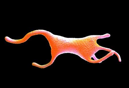 protozoa: Amoeba proteus protozoan. This is a freshwater single-celled organism that feeds on bacteria and smaller protozoa. Stock Photo