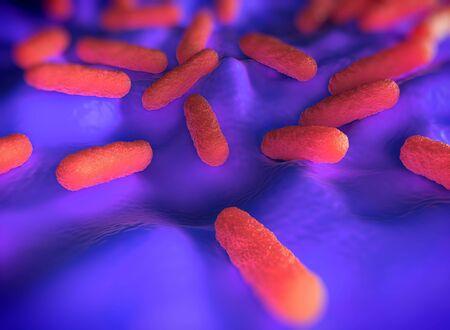 salmonella: Salmonella typhimurium bacteria Stock Photo