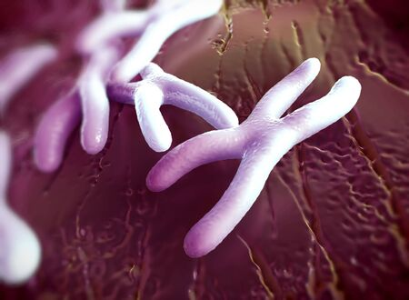 Chromosomes are a packaged form of the genetic material DNA  and form during cell replication
