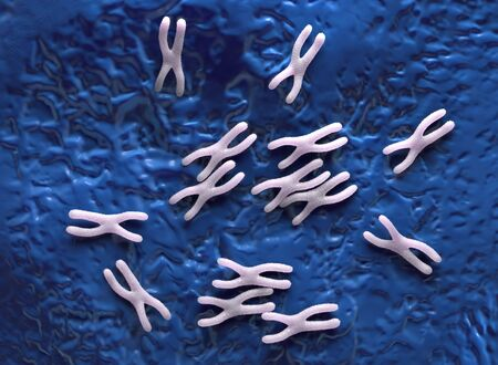 replication: Chromosomes are a packaged form of the genetic material DNA  and form during cell replication