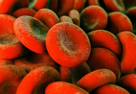 histology: red blood cells Stock Photo