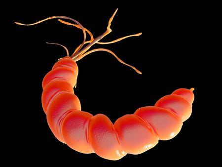 helicobacter: Helicobacter pylori Stock Photo