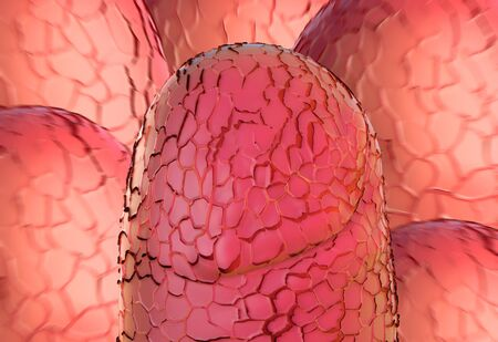 magnified image: Small intestine villi