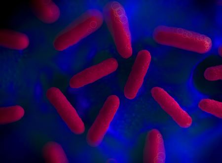 bulgaricus: Illustration of bacteria cells