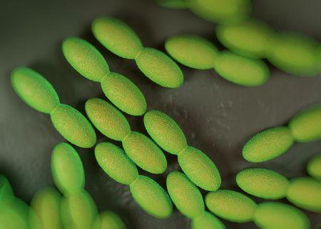 acetic acid: Acetic acid bacteria