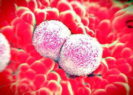 3d rendering - Neisseria gonorrhoeae bacteria