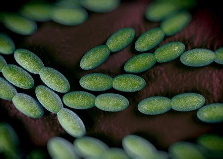 gram negative: 3d rendering - acetobacter bacteria