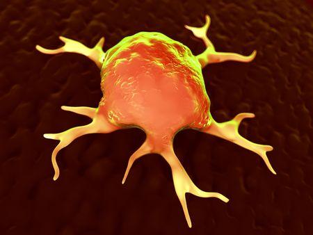 3d rendering - macrophages Standard-Bild