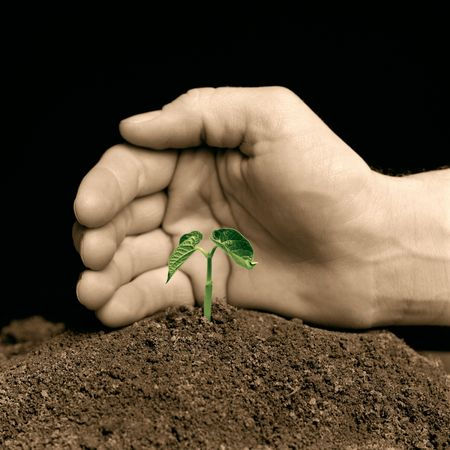 hand protecting a young seedling - hand-colored bw photo Stock Photo