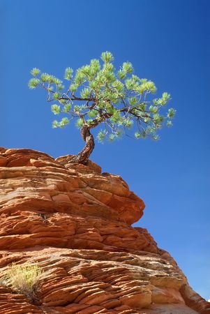 Lone Tree Clinging To Rocky Ledge