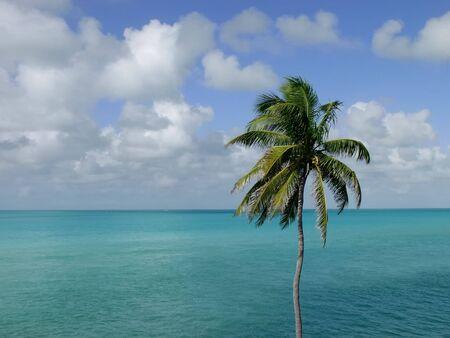 Coconut Palm Tree, in the Florida Keys, overlooking the ocean Stok Fotoğraf - 3010487