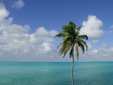 Coconut Palm Tree, in the Florida Keys, overlooking the ocean Stok Fotoğraf - 3010486