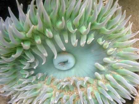 Underwater close-up of anemone in a tide pool