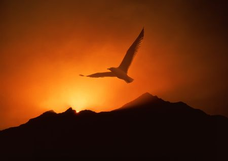 Inspiring seagull soaring over mountain sunrise