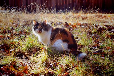 cat in backyard on a sunny day Фото со стока