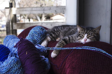Striped cat relaxing on chair with yarn Фото со стока