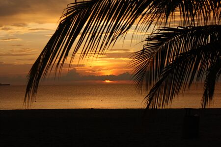 Caribbean sunset with palm tree