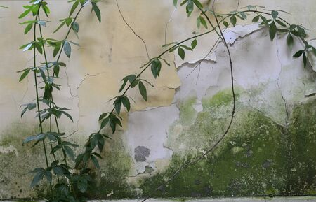 quartered: Ruined wall in an abandoned house