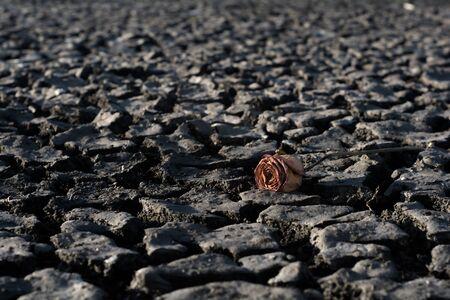 moods: Dry flower on dry ground