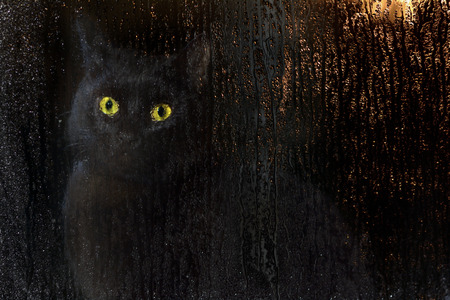 tarnished: cat giving hurt to enter the house Stock Photo